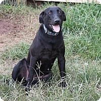 Adopt A Pet :: Addie - Natchitoches, LA