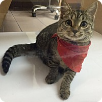 Adopt A Pet :: Cutie - Oakland Park, FL