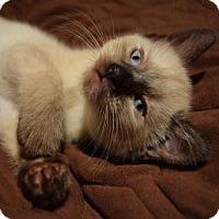 Adopt A Pet :: Mia - Hurst, TX
