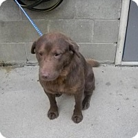 Adopt A Pet :: Augie - Rexford, NY