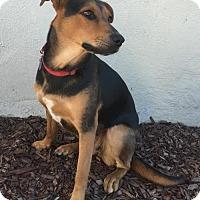 Adopt A Pet :: 'Luca' - Fresno, CA