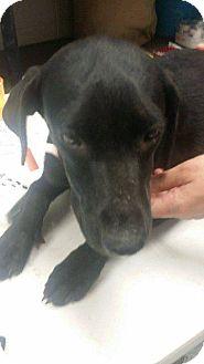 Labrador Retriever Mix Dog for adoption in Livingston Parish, Louisiana - Jennifer
