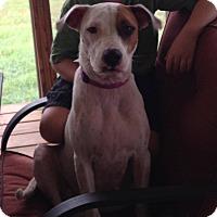Adopt A Pet :: Sophia - Salem, MA