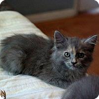 Adopt A Pet :: Phoenix - Los Angeles, CA