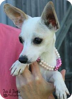 Chihuahua Mix Dog for adoption in Yukon, Oklahoma - Lucita