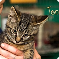 Adopt A Pet :: Tony - Somerset, PA