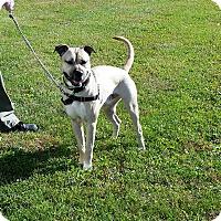 Adopt A Pet :: Vincent - Cameron, MO