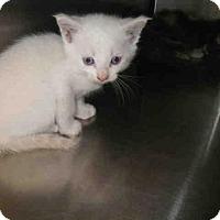 Adopt A Pet :: GECKO - Jacksonville, FL