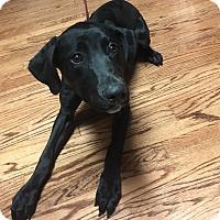 Adopt A Pet :: Al - Bridgewater, NJ