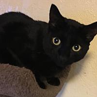 Adopt A Pet :: Onyx - Lauderhill, FL