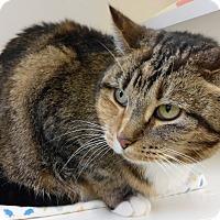 Adopt A Pet :: Jazzy - Cloquet, MN