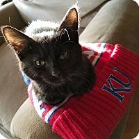 Adopt A Pet :: Auroa - Hainesville, IL
