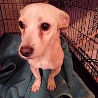 Adopt A Pet :: PEEWEE - TAHOKA, TX