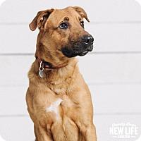 Adopt A Pet :: Bellingham - Portland, OR