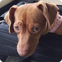 Adopt A Pet :: Chrystal Campbell - Houston, TX
