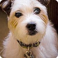 Adopt A Pet :: Pippa - Thomasville, NC