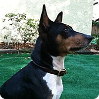 Adopt A Pet :: King - Seminole, FL