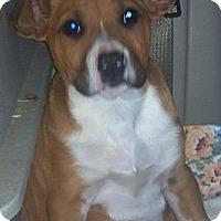 Adopt A Pet :: Bruno the Lover! - Hazard, KY