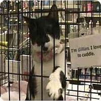 Adopt A Pet :: Gillian - The Colony, TX