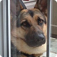 Adopt A Pet :: Joshua - Philadelphia, PA