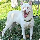 Adopt A Pet :: Duvel
