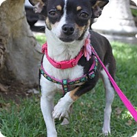 Adopt A Pet :: Pia - Los Angeles, CA