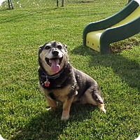 Adopt A Pet :: Harley - Chewelah, WA