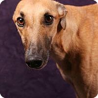 Adopt A Pet :: Amy - West Palm Beach, FL