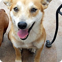 Adopt A Pet :: Silas - Oakley, CA