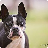 Adopt A Pet :: JILLIAN - Weatherford, TX