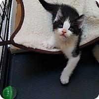 Adopt A Pet :: Cody - Pasadena, CA