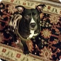 Adopt A Pet :: Nathan - Greensboro, NC