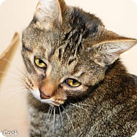 Adopt A Pet :: Jaws - Ann Arbor, MI
