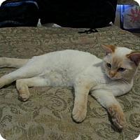 Adopt A Pet :: Stinky - Monrovia, CA