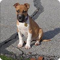 Adopt A Pet :: Luci Lu - Neosho, MO