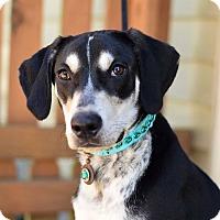 Adopt A Pet :: Max - Baton Rouge, LA