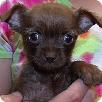 Adopt A Pet :: POPPY - Corona, CA