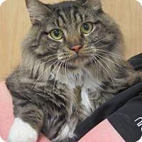 Adopt A Pet :: Cory - Wildomar, CA