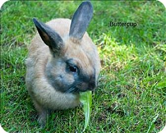 Dutch Mix for adoption in Vancouver, British Columbia - Buttercup