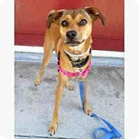 Adopt A Pet :: JESSE - San Francisco, CA