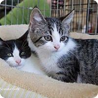 Adopt A Pet :: Huck - Merrifield, VA
