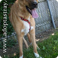 Shepherd (Unknown Type) Mix Dog for adoption in Newport, Kentucky - Dill