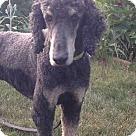 Adopt A Pet :: Bentley