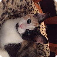 Adopt A Pet :: Colleen (LE) - Little Falls, NJ
