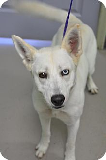 Husky Mix Dog for adoption in Erwin, Tennessee - Mia
