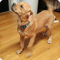 Adopt A Pet :: Lotus - Hanover, PA