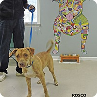Adopt A Pet :: Rosco - Washington, GA