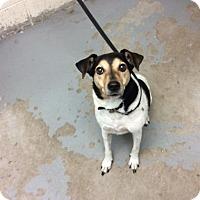 Adopt A Pet :: Artie - Janesville, WI