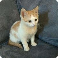 Adopt A Pet :: Kevlar - Camden, DE
