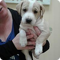 Adopt A Pet :: Bindi - Thousand Oaks, CA